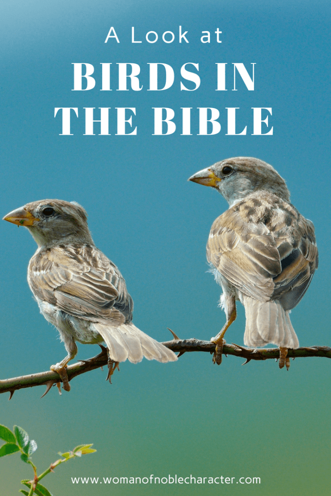 a look at birds in the Bible, symbolism of birds, Bible symbolism