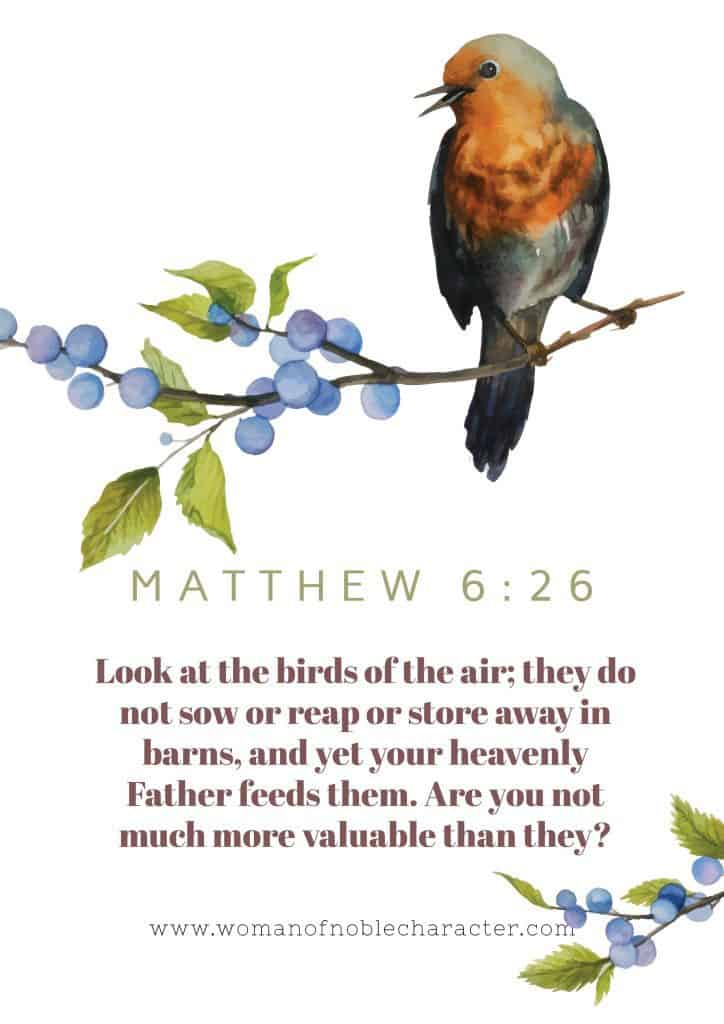 Matthew 6:26 Bible verse Birds in the Bible
