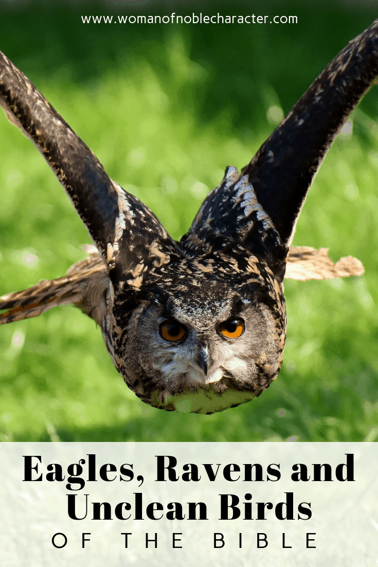 eagles, ravens and unclean birds of the Bible - Eagles, Ravens and Unclean Birds of the Bible