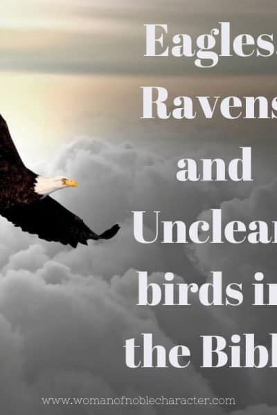 Eagles, Ravens and Unclean birds in the Bible