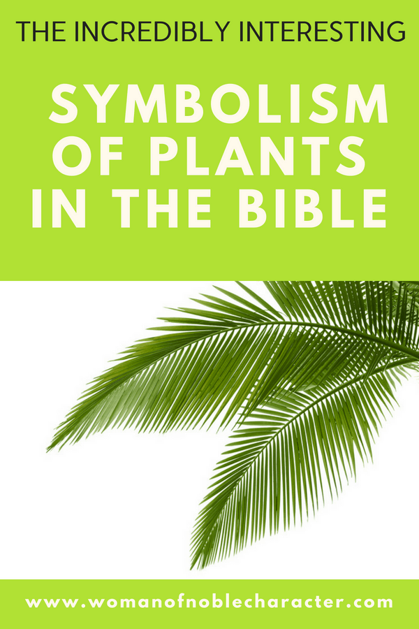 plants in the Bible; palm trees in the Bible