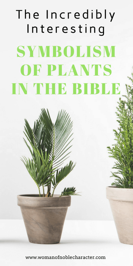 symbolism of plants in the Bible what plant Bible symbolism means
