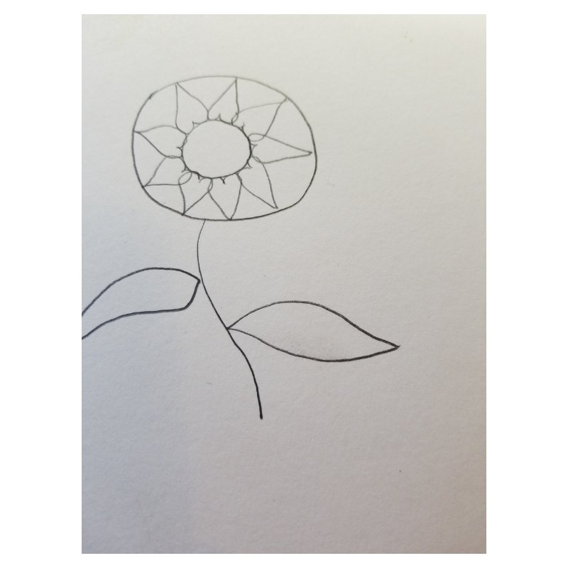 sunflower - flowers for Bible journaling 1