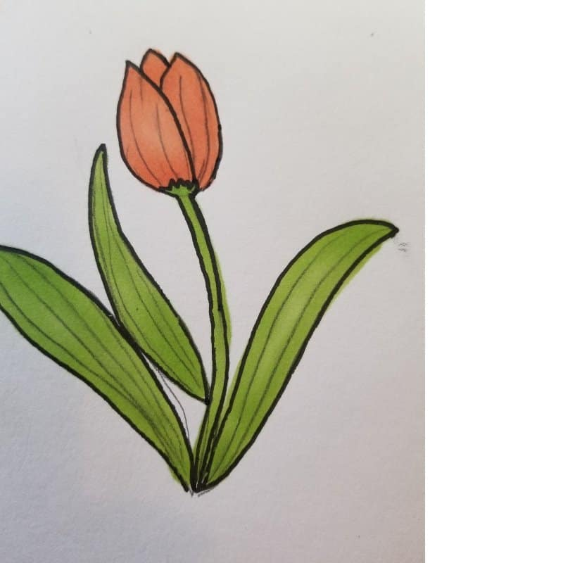 tulip - flowers for Bible journaling