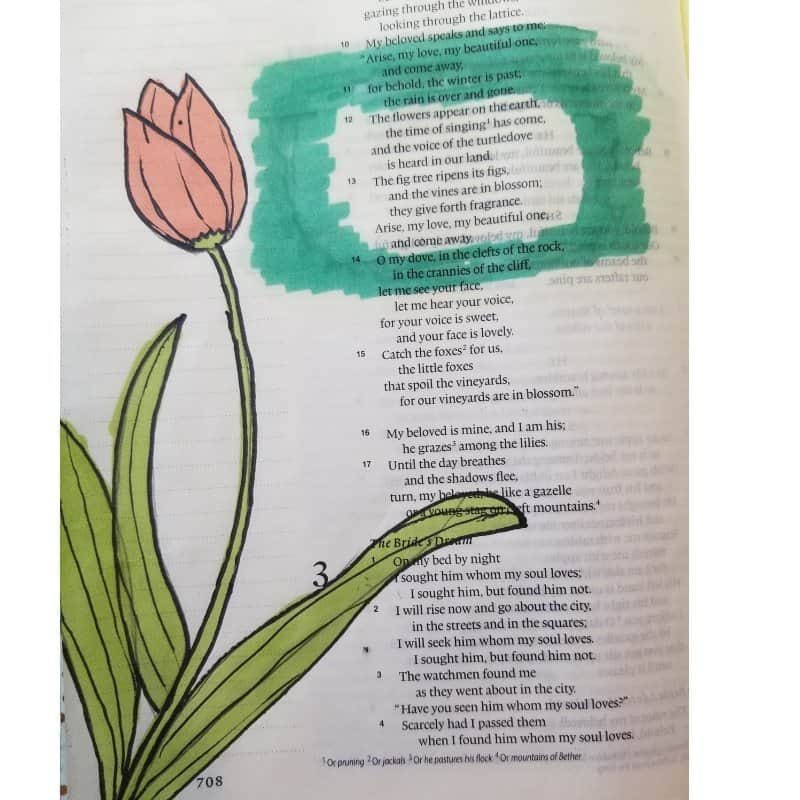 tulip - flowers for Bible journaling on a Bible page