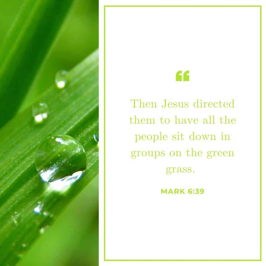 An image of grass with dew on it and a text overlay quoting Mark 6:39
