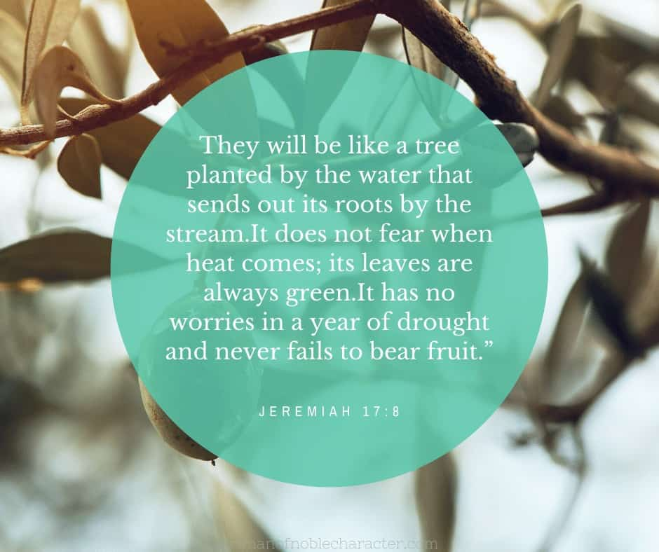 An image of a tree with a text overlay with Jeremiah 17:8 quoted